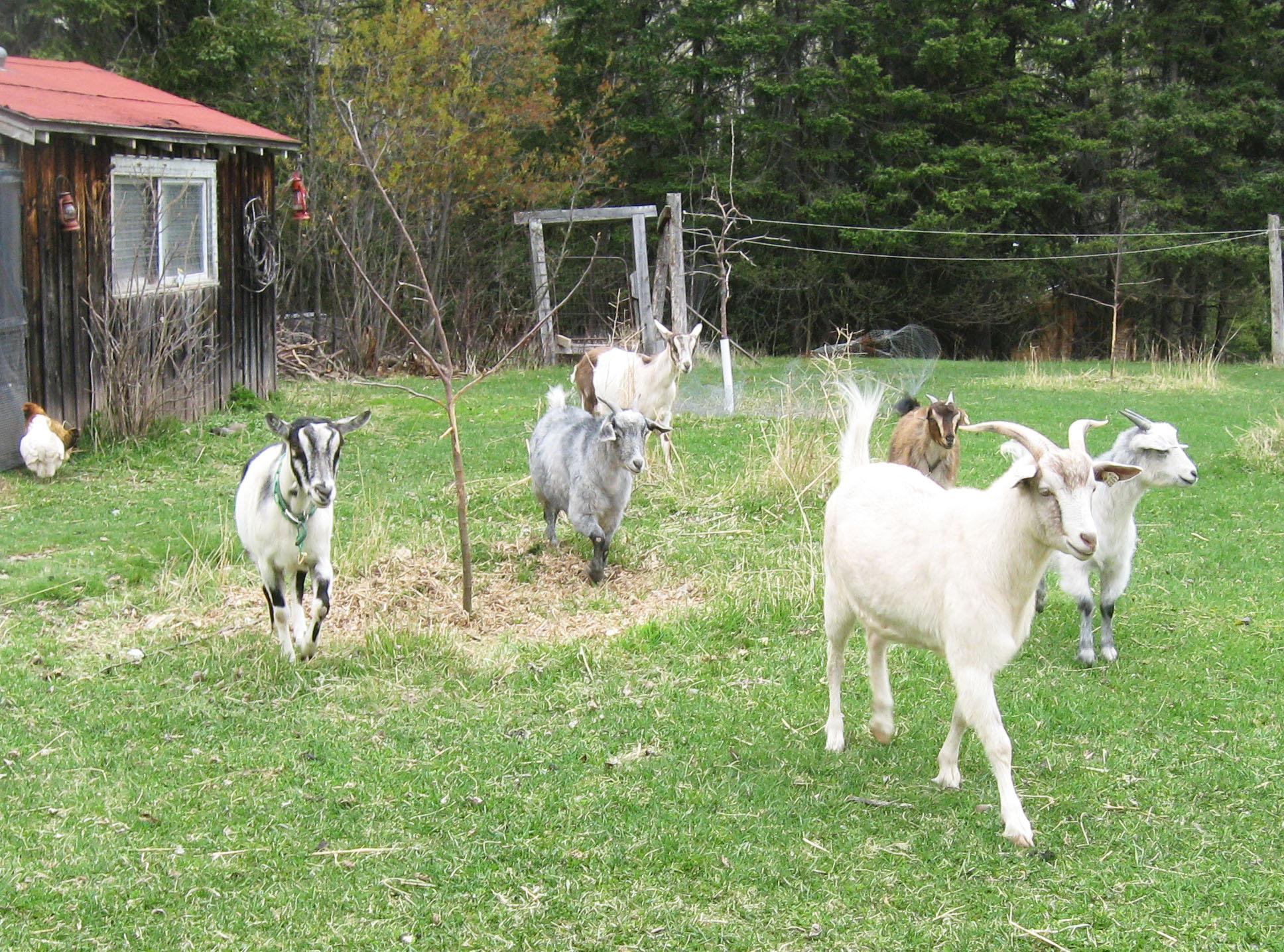 Homesteading on the North Shore: Nick Wharton & Good Nature Farm