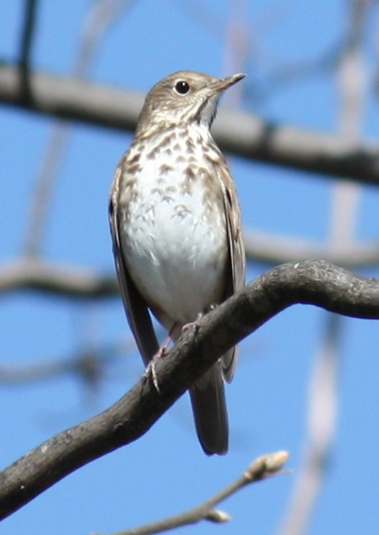 Migrating Birds and Dragon Flies Return North