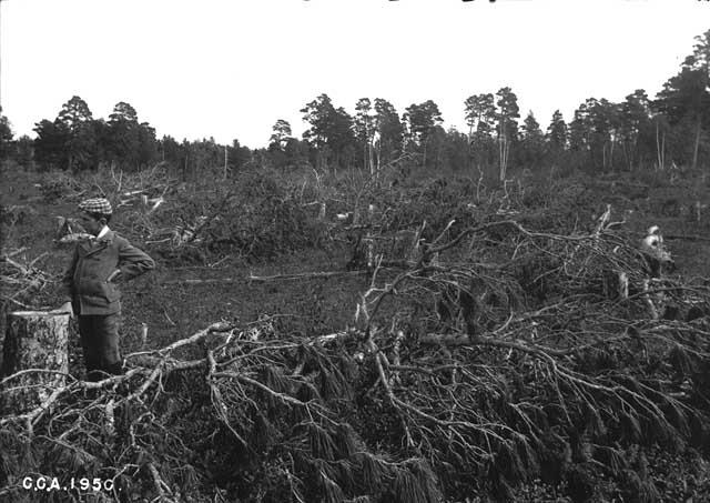The Battle of Sugar Point on Leech Lake