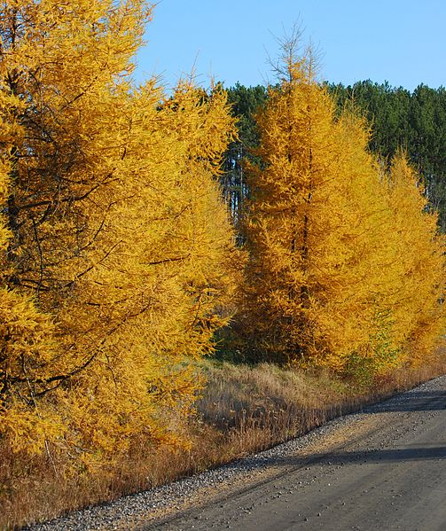 October Brings Warm Days And The Last Colors Of Autumn
