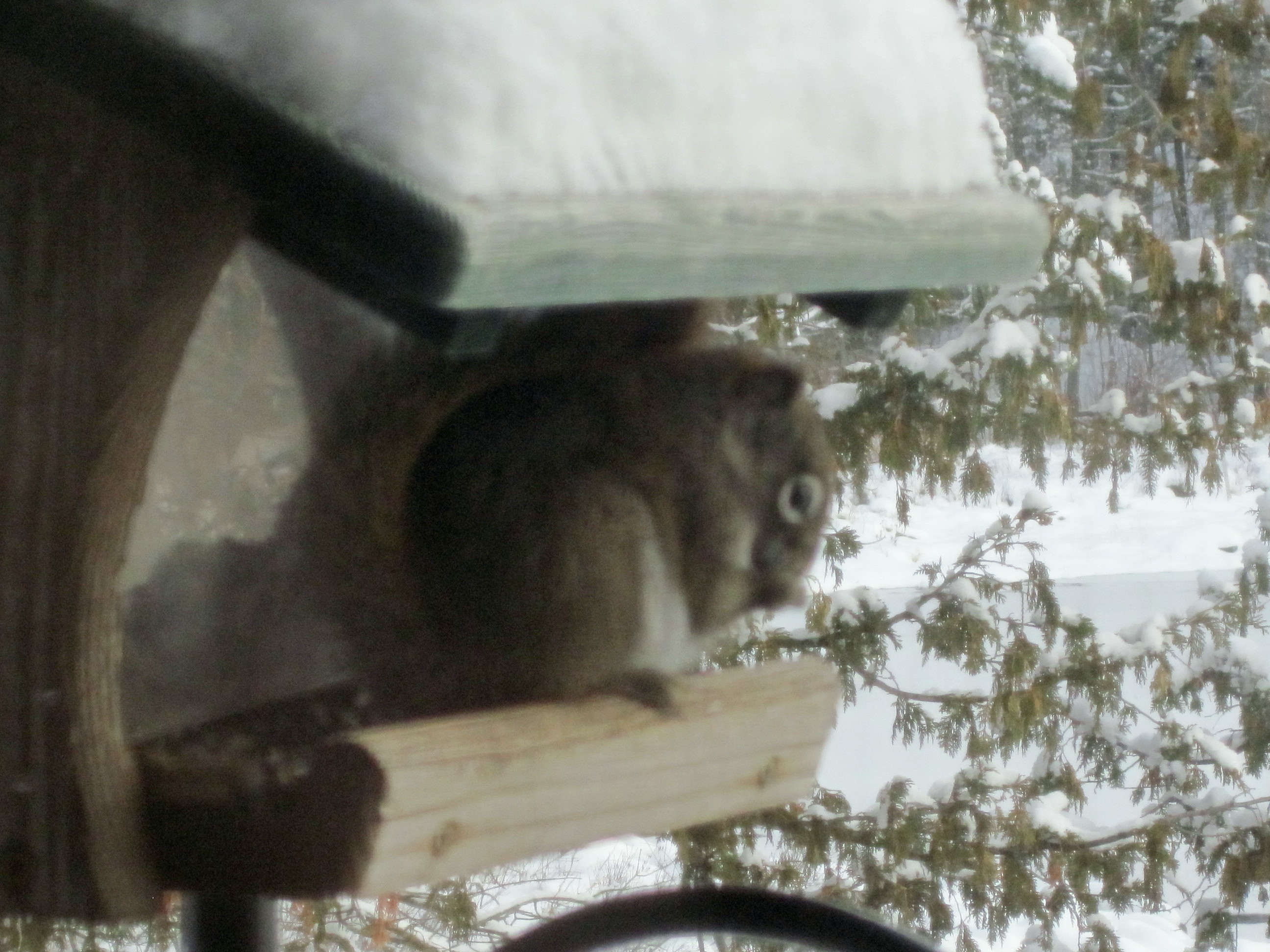 The King Of The Feeders