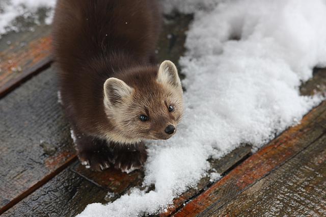 Savoring Winter Silence On The Gunflint