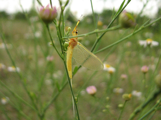 It's Time For The Mayfly Transformation