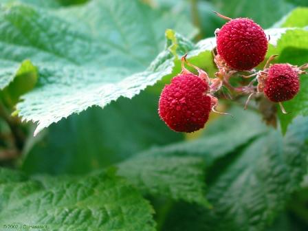 Space Ship Seasonal Fruits