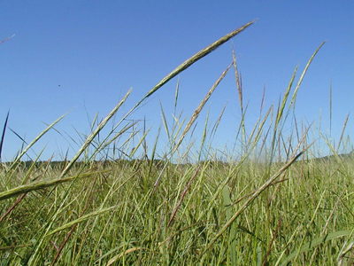 Air & Water Quality Testing, Wild Rice, and Tunneling Moles