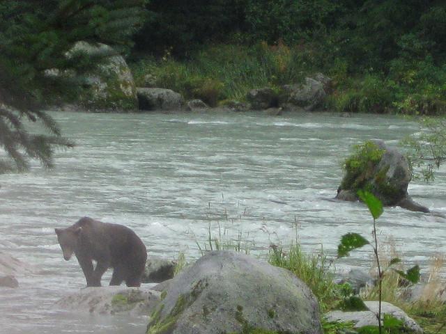 Aware Of Bears, But Not Afraid