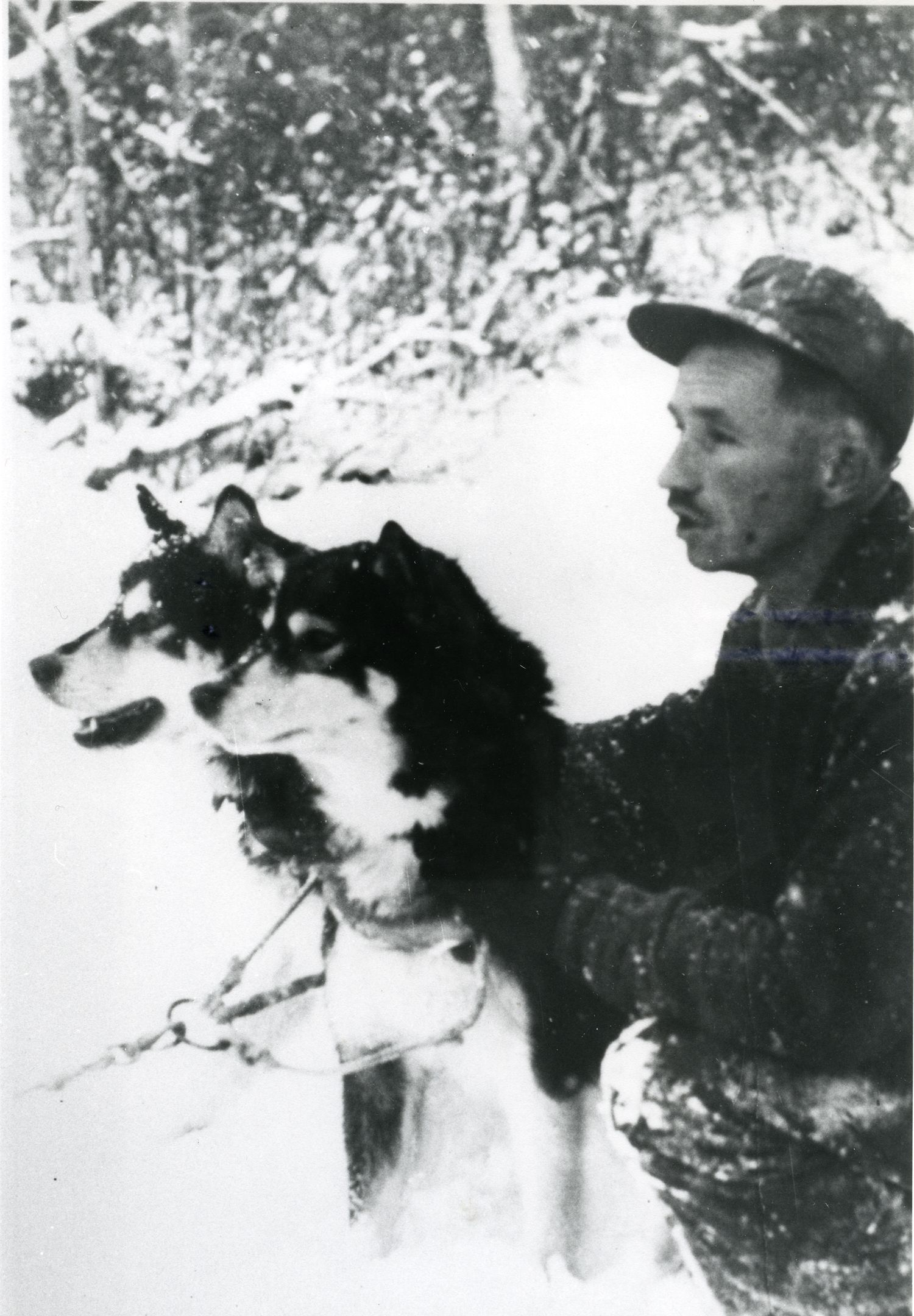 Canoe Country Trapper Traveled by Dog Team
