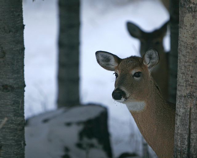 The Deer Hunters Round-Up
