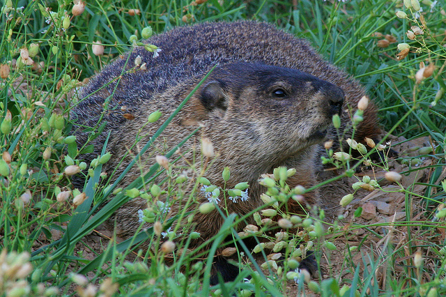 Groundhogs' Day