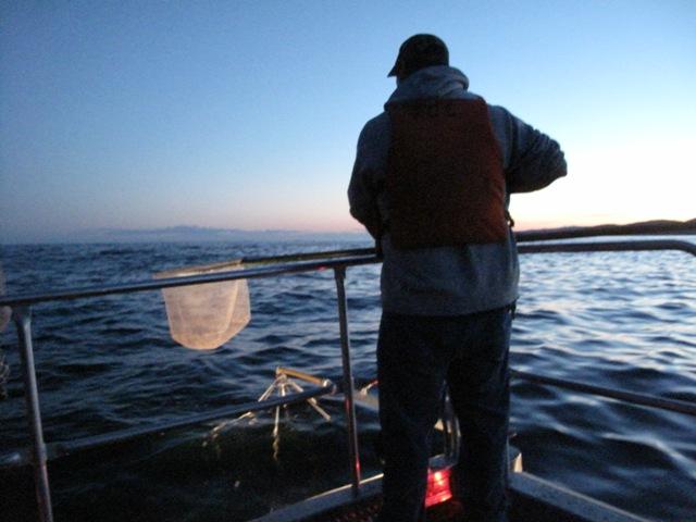 Electrofishing survey on Lake Superior