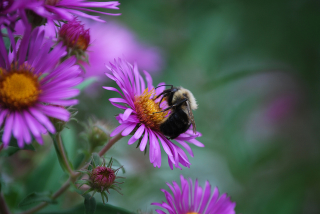 Bumblebees In Fleece Jackets