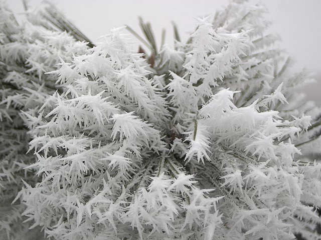 Hoar frost; the feathery ice that covers everything