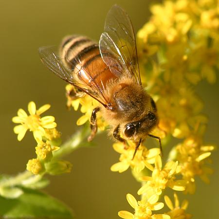 "QQ ""Bees"" 6-26-13"