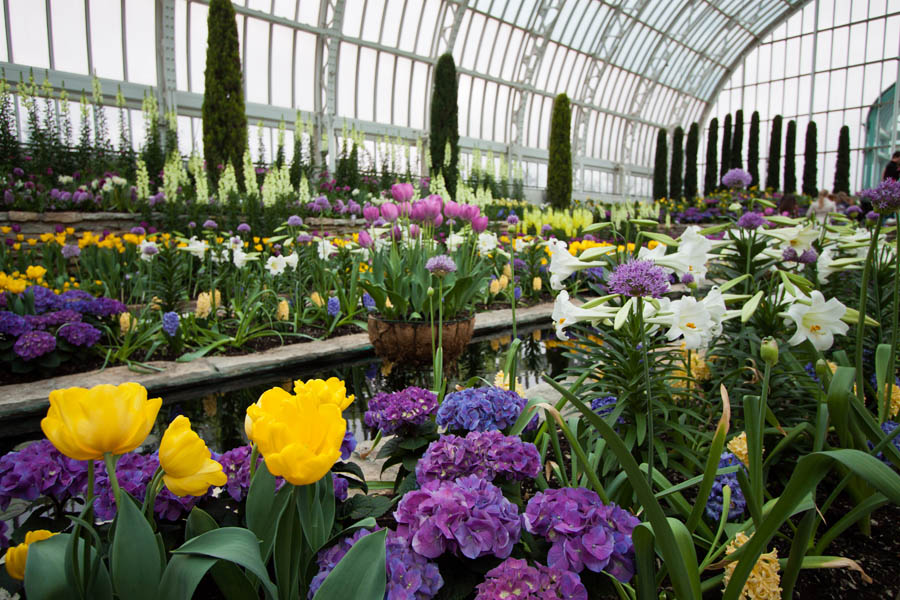 The Marjorie McNeely Conservatory at Como Park