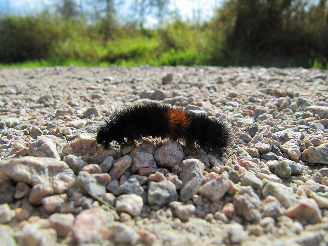 Wooly Bears and Laying in the Winter Reading