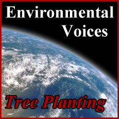 Tree Planting on the Leech Lake Reservation