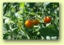 Dream of Wild Health saves seeds traditionally cultivated by Native American communities