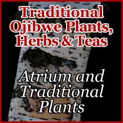 Atrium and Traditional Plants