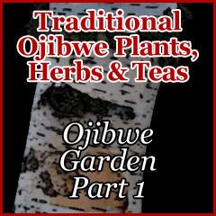 Ojibwe Garden Part 1