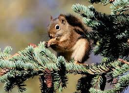 Gray November Days, Red Squirrels and a Busy Bird Feeder