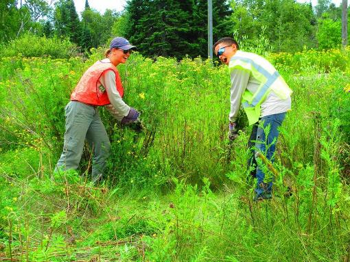 Noxious weed control and the Cook County Invasive Team