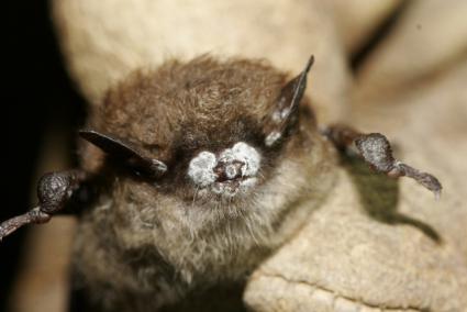 National Bat Week: Oct 26 – Nov 1