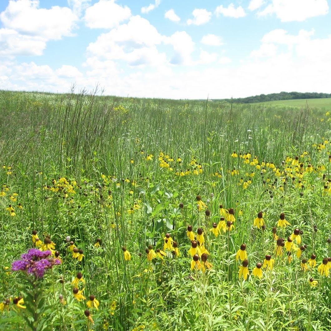 Saving paradise: protecting Minnesota prairies