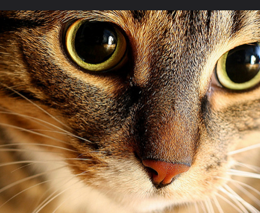 Cat Soundscope