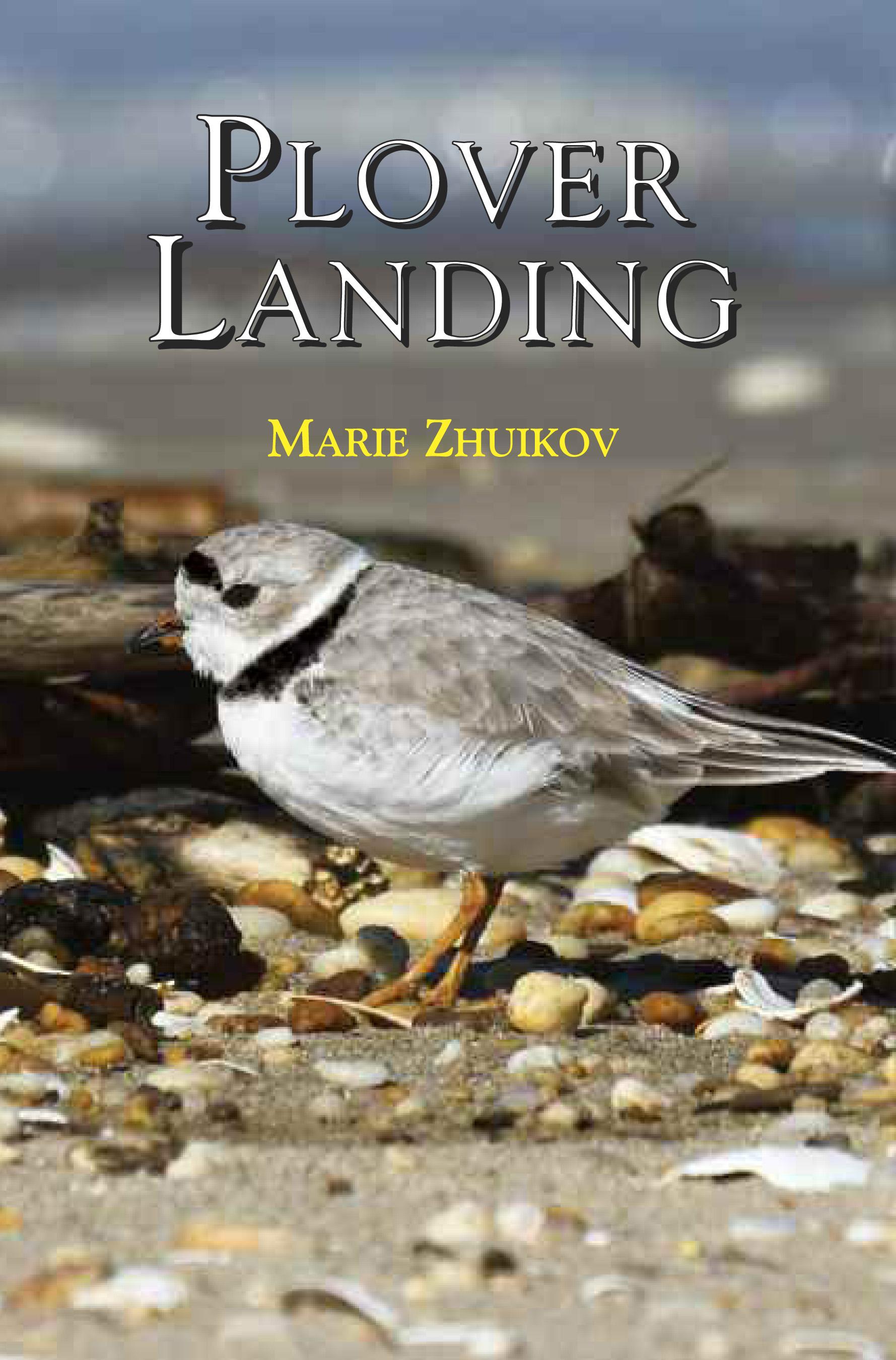 """""""Plover Landing"""" by Marie Zhuikov"""