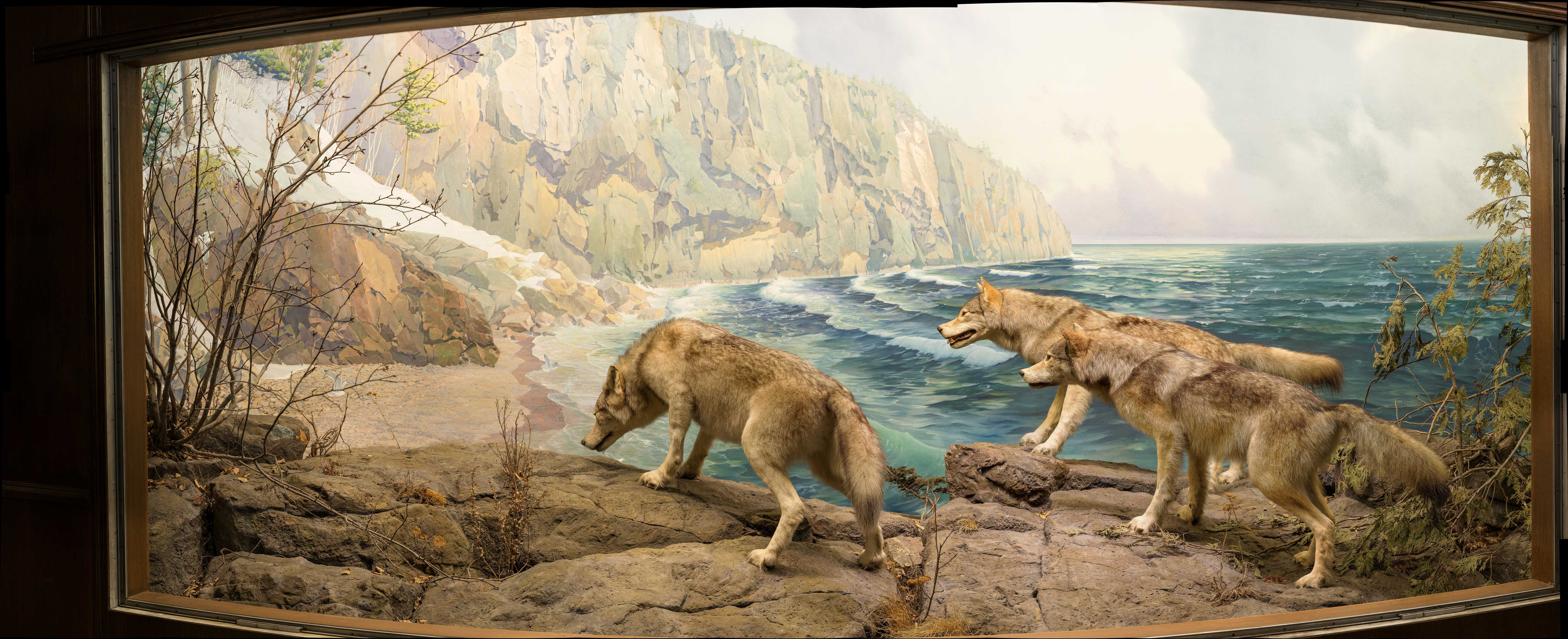 Before Animal Planet, Dioramas Revealed Nature in 3-D