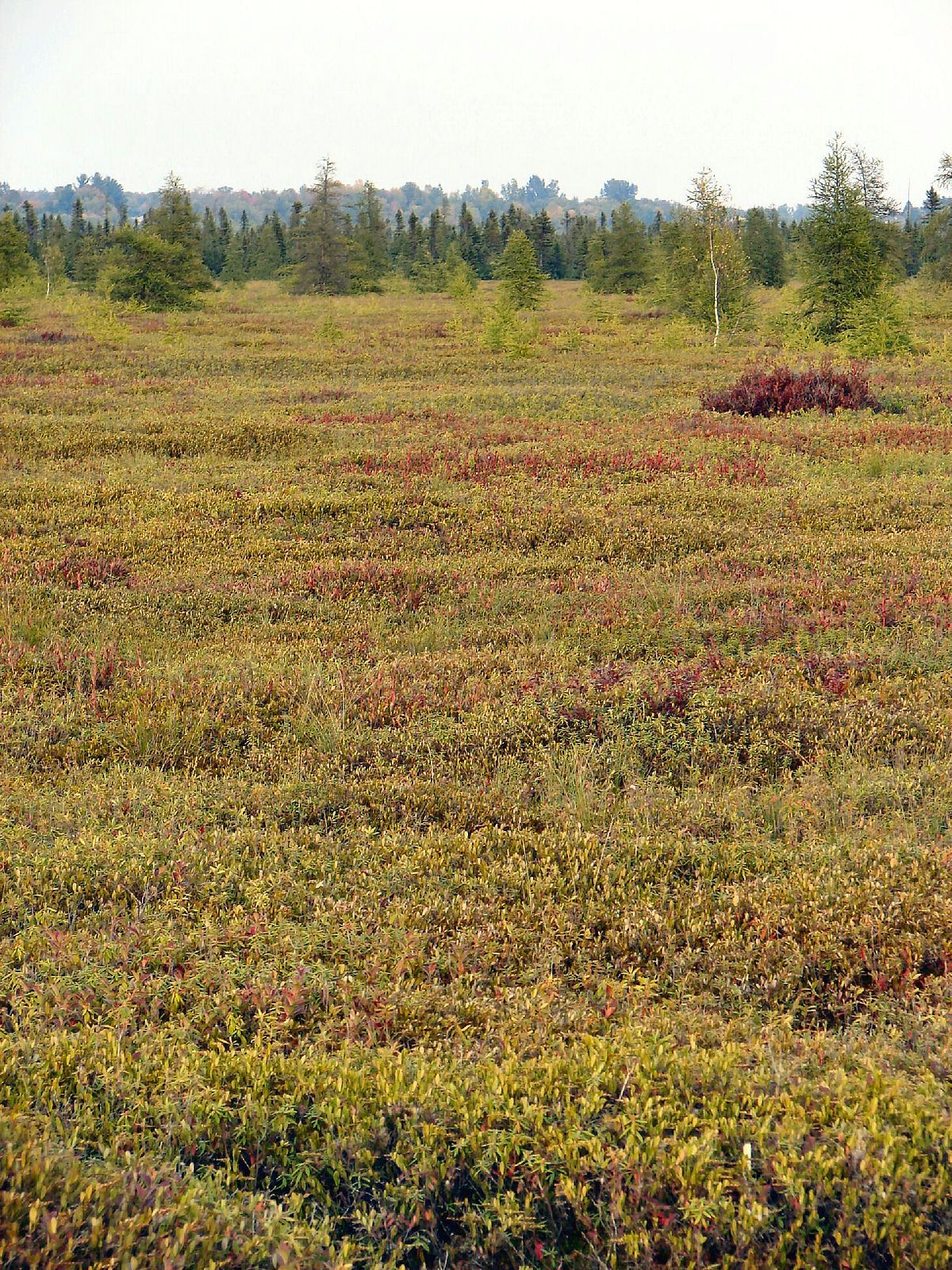 Don't know much about peatlands? This will get you started