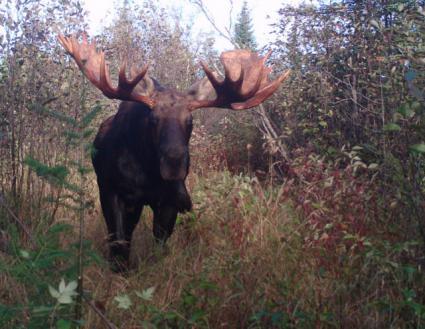 """Moose Madness"""
