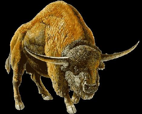 MN90: Minnesota's Extinct Bison