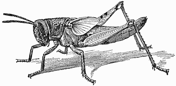 MN90: The Locust Plagues of the 1870s