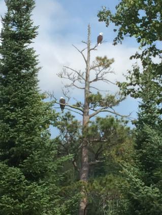 Eagle Sentinels