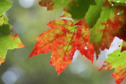 The science behind fall color changes