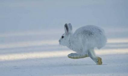 Hare race