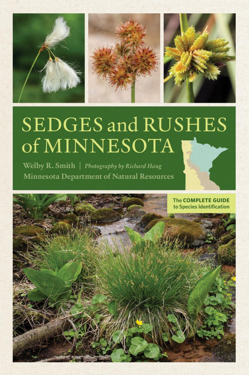 "MN Reads: ""Sedges and Rushes of Minnesota"" by Welby R. Smith"