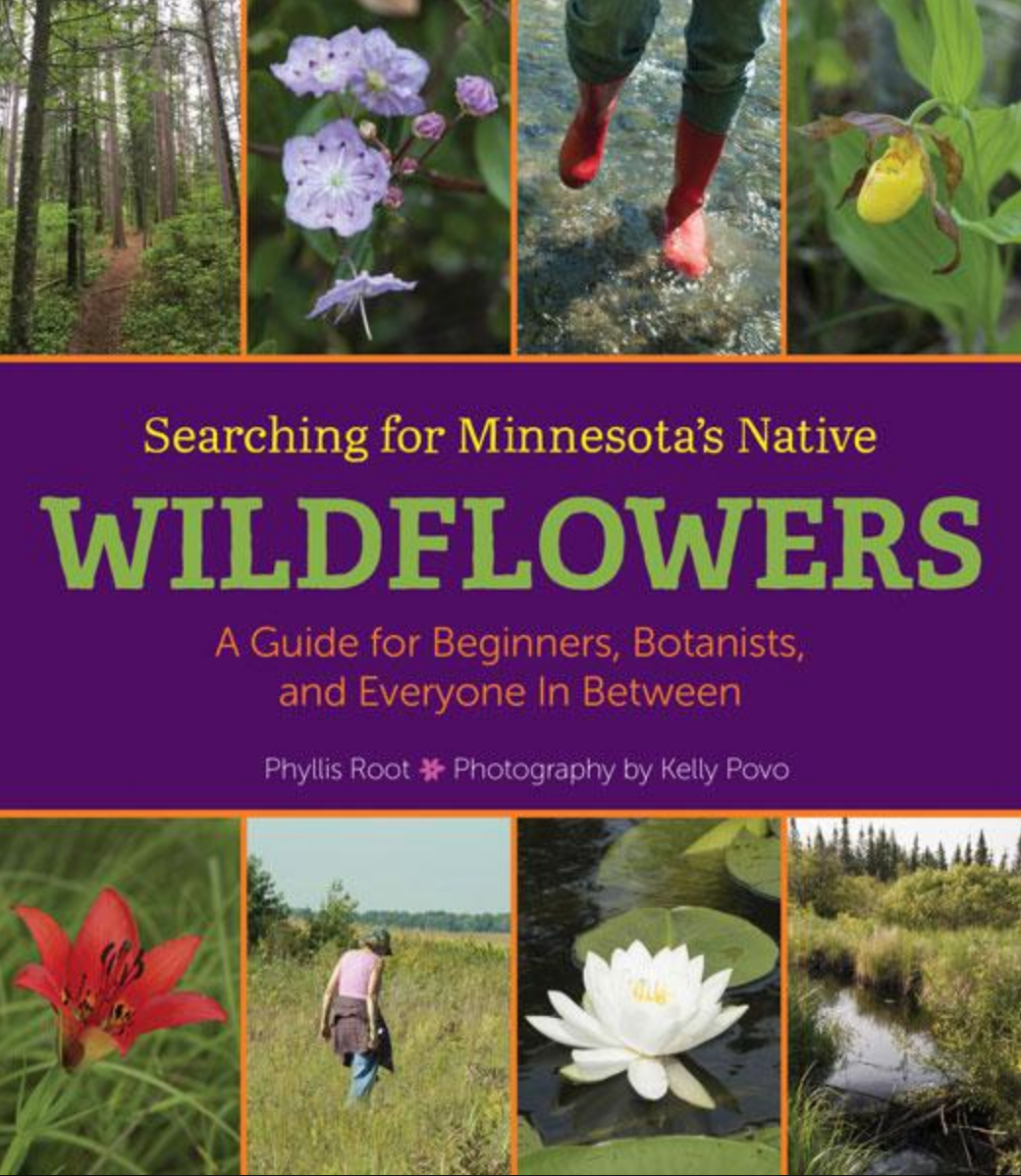"MN Reads: ""Searching for Minnesota's Native Wildflowers"" by Phyllis Root, photographed by Kelly Povo"