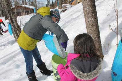 Grand Portage CACHE Project: The Maple Harvest
