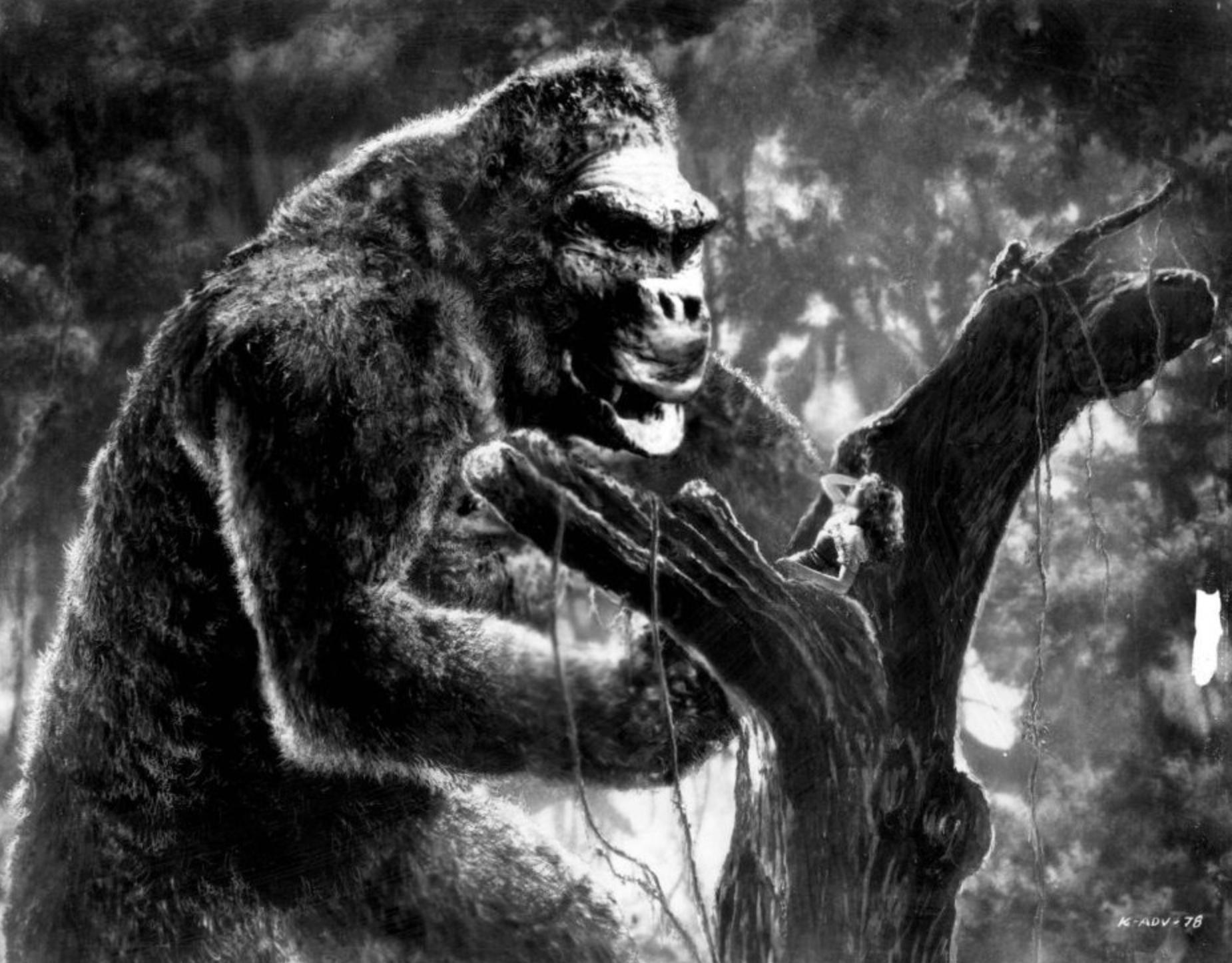 MN90: The Gorilla Picture
