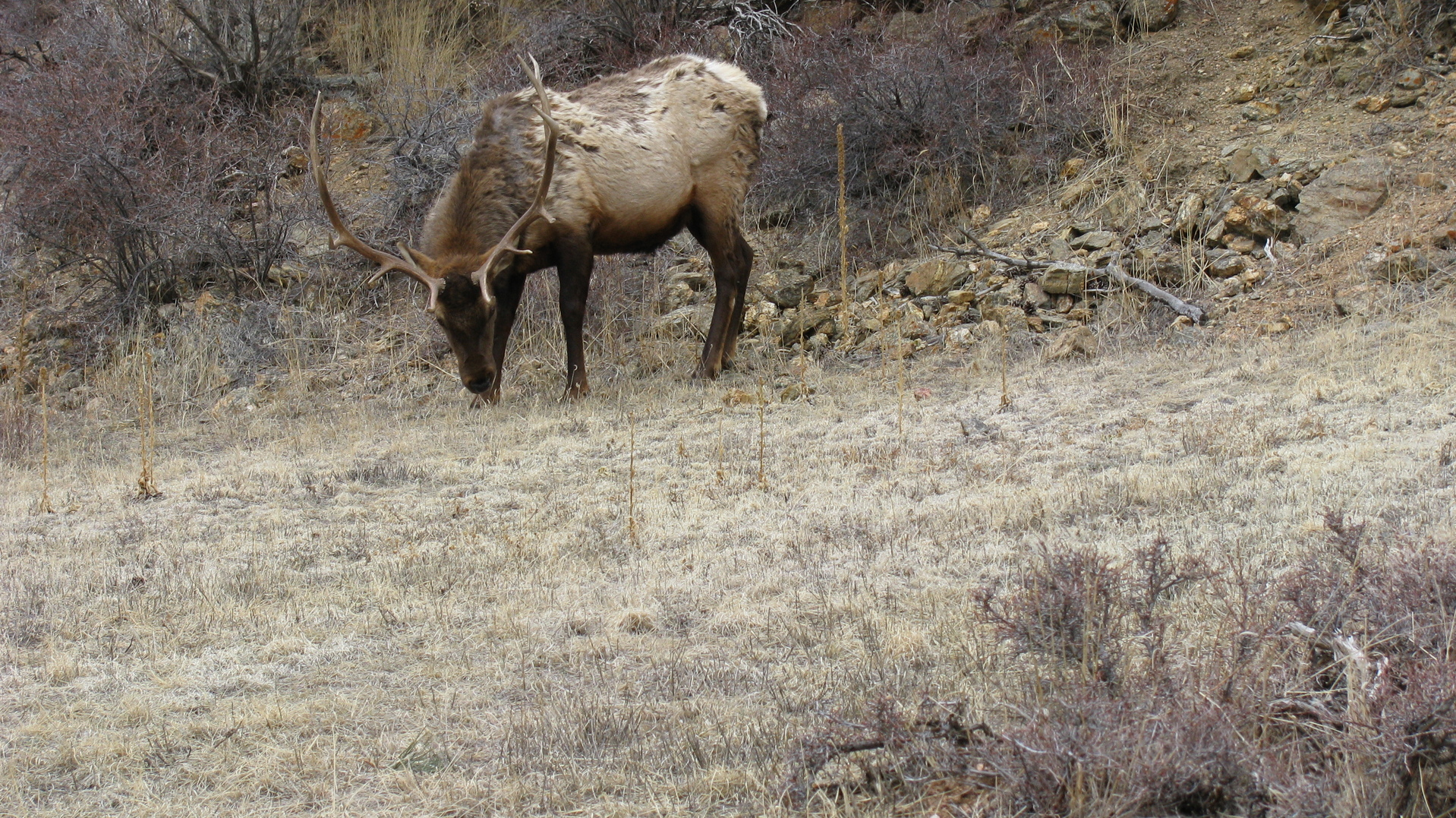 MN Native News: Fond Du Lac Band Of Lake Superior Chippewa's Proposal To Expand Elk Population